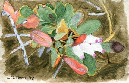 Kinnikinnick in bloom