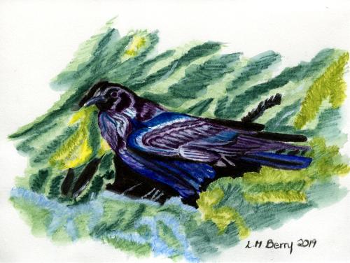 Raven at Bow Summit