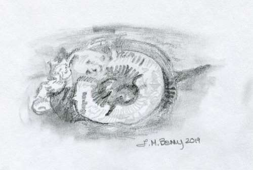 Fossil sketch